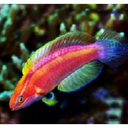 buy saltwater,freshwater aquarium,pond live fish